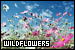 Plants/Flowers/Herbs) - Wildflowers