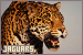 Mammals: Felines - Jaguars