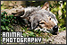Photography/Photographers - Photography: Animal/Wildlife