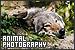 Photography/Photographers - Photography: Animal/Wildlife