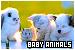 General Animals - Baby Animals