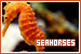 Aquatic Animals - Seahorses