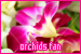 Plants/Flowers/Herbs - Orchids