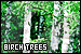Plants/Flowers/Herbs - Trees: Birch