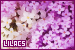 Plants/Flowers/Herbs - Lilacs