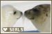 Aquatic Animals - Seals