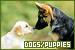 Mammals: Canines - Dogs & Puppies