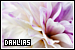 Plants/Flowers/Herbs - Dahlias