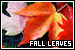 Plants/Flowers/Herbs - Fall Leaves