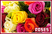 Plants/Flowers/Herbs - Roses