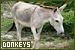 Mammals: Equines - Donkeys