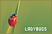 Invertebrates - Ladybugs (Ladybirds)