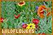 Nature: Plants/Flowers/Herbs - Wildflowers