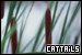 Plants/Flowers/Herbs - Cattails
