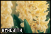 Plants/Flowers/Herbs - Hyacinth