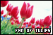 Plants/Flowers/Herbs - Tulips