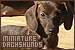 Mammals: Canines - Dogs: Miniature Dachshunds