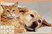 Politics and Organisations - ASPCA and NSPCA