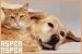 Politics and Organisations - ASPCA and NSPCA